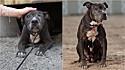 Vivendo 9 anos pelas ruas de Los Angeles, Califórnia (EUA), cadela é resgata e recebe os melhores dias da sua vida.