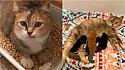 A gatinha Priscila foi resgatada das ruas de Salem, no Oregon, Estados Unidos, com os seus quatro filhotes.