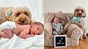 O objetivo da família era registrar o primeiro mês de vida do bebê, mas a sessão contou com a participação especial do cão Bentley.