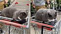 Christine Gray estava pronta para ir embora da loja de jardinagens quando foi surpreendida pelo mascote do local, o gato Boots.