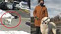 Uma cachorrinha de Ottawa, Canadá, salvou a sua dona que desmaiou na calçada ao pedir socorro a um motorista.