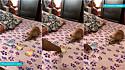 Vídeo de cão cuidando das finanças viraliza no YouTube.