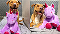 Cão ganha ursinho de pelúcia que roubou cinco vezes em uma loja nos Estados Unidos e é adotado.