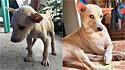 Cachorrinho resgatado das ruas de Bulacan, nas Filipinas, em foto com pose de atitude mostra que o amor transforma.