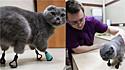 Gatinha que teve as patas congeladas devido a inverno rigoroso e teve que amputá-las ganha pernas biônicas.