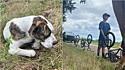 Adolescentes encontram cachorro machucado na estrada e decidem ajudá-lo.