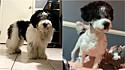 O cachorrinho foi levado ao pet shop e o resultado foi um tanto quanto inesperado.