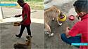 Carlito Souza tem feito o maior sucesso no TikTok ao compartilhar vídeos alimentando animais carentes.