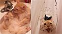 O gatinho descobriu a sua paixão por água e agora toda vez que a dona vai paro o banho ele a segue e destrói a cortina.