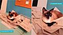 Estudante de Arquitetura e Urbanismo flagra seu gato destruindo sua maquete