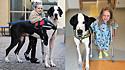 Cão terapeuta ajudda menina deficiente física em sua rotina.