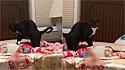 O gatinho preto com branco é flagrado massageando criança e vídeo encanta internautas.