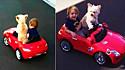 Cadelinha leva bebê para passear em mini Mercedes.