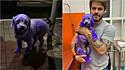Felipe Becari e sua equipe resgatam cadela presa em poste nas ruas de São Paulo.