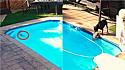 Cadela salva seu irmão canino que caiu na piscina de casa em Kempton Park, Gauteng, na África do Sul.