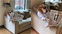 Golden retriever é filmando lendo jornal e sentado no sofá de sua casa em Richmond, Virgínia, Estados Unidos.