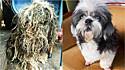 Homem resgata cadela das ruas da Tailândia e ela tem uma verdadeira transformação.