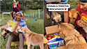 Abrigo de animais recebe donativos e os cães participam na abertura do pacote.