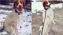 Cão faz sucesso nas redes sociais por sua incrível habilidade de andar em duas patas.