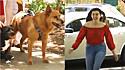 Cães tem reencontro emocionante com a sua dona, depois dela passar seis meses longe de casa.