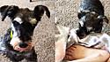 Mesmo desconfiado com amor humano, cão resgatado cobre pés de voluntária que o salvou.