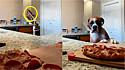 Vídeo de boxer viraliza ao tentar roubar pizza da cozinha.