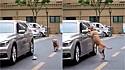 Cachorro dá lição em motorista após vê-lo jogar lixo na rua.
