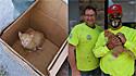 Coletores de lixo de Nova York, Estados Unidos, resgatam filhote de gato que foi abandonado no lixo.