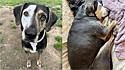 Cachorrinha resgatada de maltratos recebe todo o amor e conforto em lar temporário.