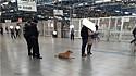 Cachorrinha de moradora de rua é amada e cuidada por funcionários da estação de metro em São Paulo.