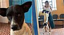 Cachorro é adotado por servidores públicos da Prefeitura de Alto Santo, no Vale do Jaguaribe, Ceará.