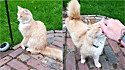 Casal se muda e gato proprietário da casa finalmente os aceita.