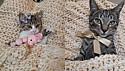 Elisandra Lovison atuava há mais de 8 anos como protetora independente e resgatou milhares de gatos.