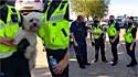 Policiais salvam cachorro trancado em carro com temperatura de 43ºC em Southend, Essex, Inglaterra.
