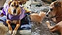 Cachorra resgatada das ruas passa a cuidar dos felinos do abrigo.