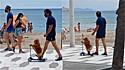 Lulu da Pomerânia chama atenção por andar de patinete elétrico no calçadão da praia.