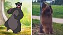 Urso é flagrado por visitantes de parque roçando as costas em poste e cena lembra filme da Disney.