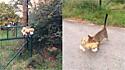 Gato invade casa do vizinho para pegar o tigre de pelúcia emprestado.