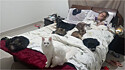Gatos e cachorrinha fazem companhia a sua tutora durante isolamento social.