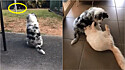 Filhote rejeitada por cães mais velhos faz linda amizade com um gato