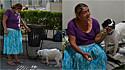 Mulher despejada com seu cão encontra refúgio na capital de El Salvador.
