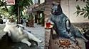 Falece gata de rua e população a homenageia com uma estátua.