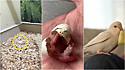 Homem resgata ovo abandonado e ajuda a transformá-lo em um lindo periquito.