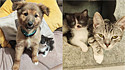 Filhote de gato resgatado faz amizade com integrantes de lar temporário.
