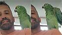 Papagaio surpreende internautas ao reproduzir o som de diferentes animais.