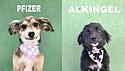 Estudante de São Paulo usa criatividade em nomes de cachorro para incentivar adoções.