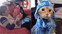 Tia tricota linda roupinha para o gatinho da sobrinha.