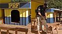 Cães adotados pela PRF ganham casinha construída por 14 detentos em Mato Grosso.