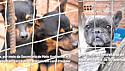 Prefeitura de Passo Fundo por meio da Operação de Fiscalização de Canis e Gatis resgata 50 animas em situação de maus-tratos.