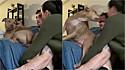 Pit bull sente ciúmes do namorado da tutora.